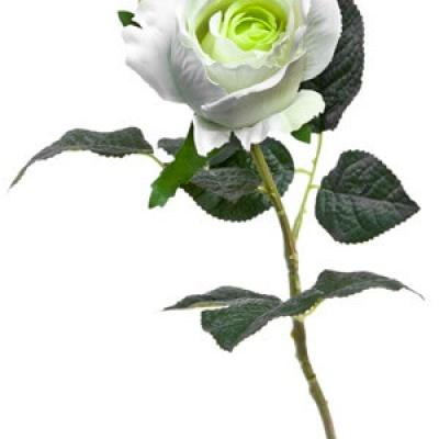 Bouton de rose blanche, 55cm (x1) REF/FTG2014