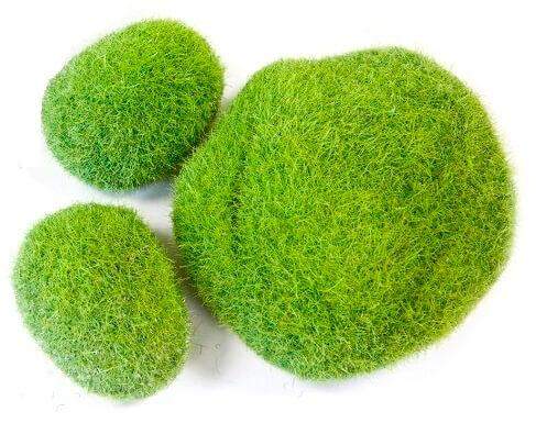 Decor pelouse