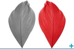 Decoration de table avec des plumes