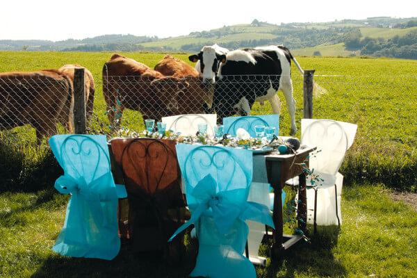 Decoration housse de chaise bleu turquoise
