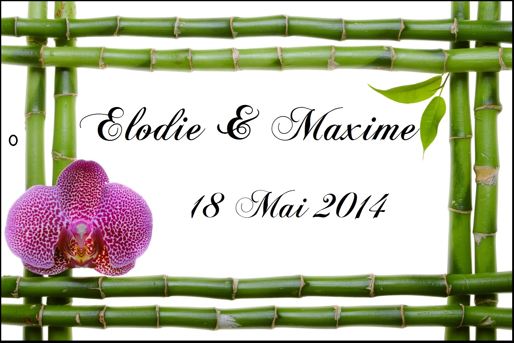 Etiquette a dragee bambou orchidee