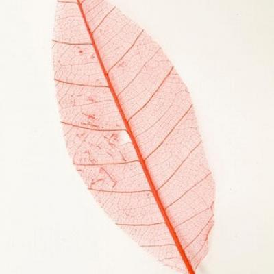 Feuille Skeleton rouge (x12) REF/DEC342