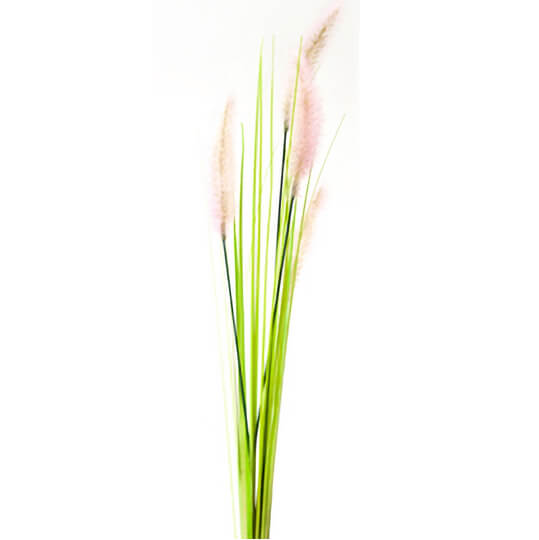 Herbe de la palma plumeau rose et vert