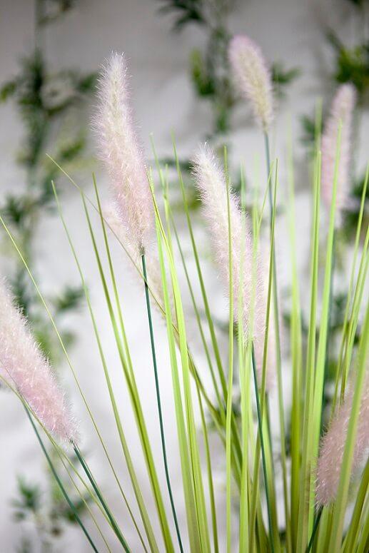 Herbe de la palma plumeau vert et rose