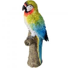 Location perroquet des îles tropicales (x1) REF/EV-431