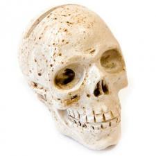 Marque-place Halloween: Crâne (x1) REF/DEC665