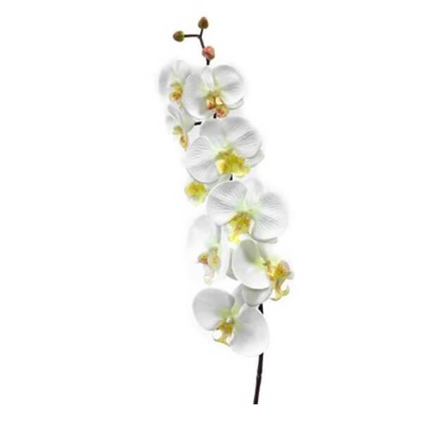 Orchidee blanche 9 fleurs 1
