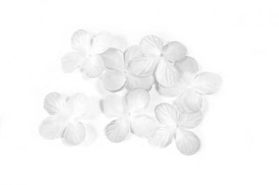 Pétale de fleur blanche (x24) REF/DEC800