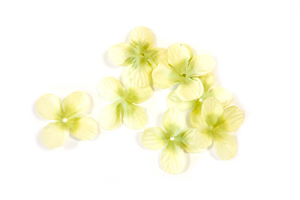 Petale de fleur vert menthe