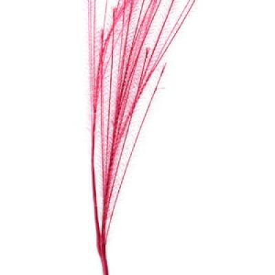 Tige de Provence fuchsia (x1) REF/3793